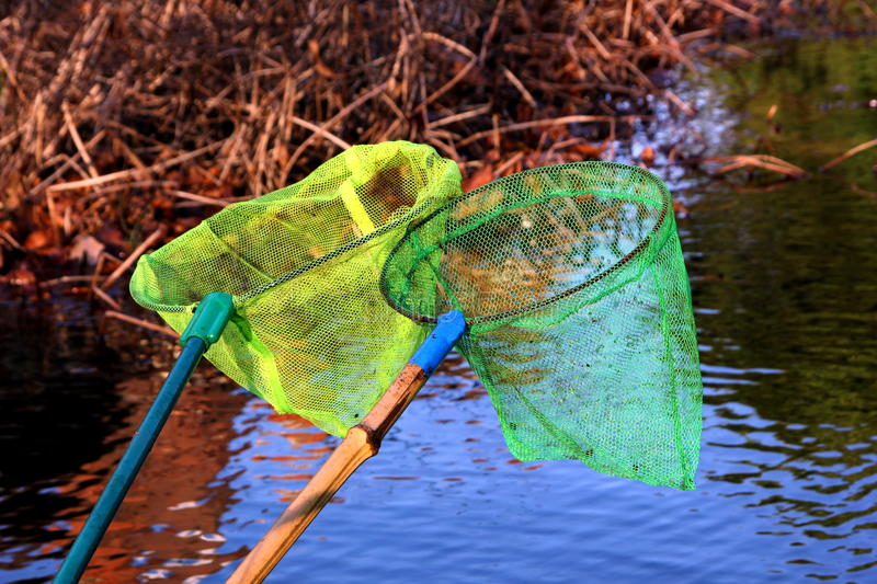 Pond dipping. Two small nets used to collect animal life from a pond or river royalty free stock image