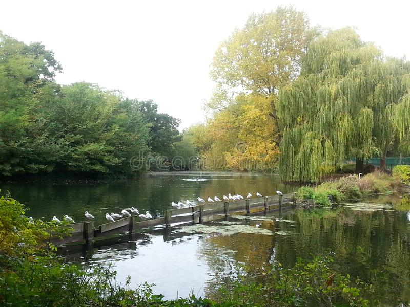 Pond at Finsbury Park London royalty free stock photography