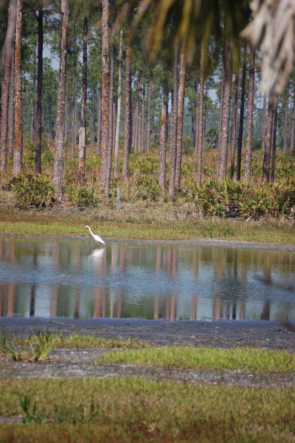 Pond fishing royalty free stock image