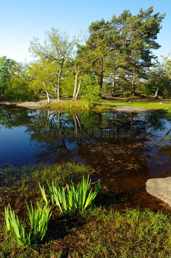 Pond  in Fontainebleau forest