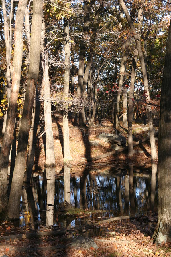 Download Pond in forest stock photo. Image of beauty, river, season - 13413324