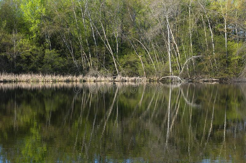Pond Forest and Reflections on Water at Salem Hills. Pond and forest scenery with reflections on water at salem hills park inver grove heights minnesota stock image