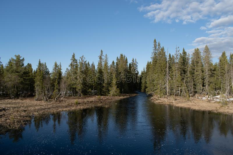 A pond in front of a Spruce Forest, with reflection on the water. Kveåa in Hedmark county Norway. Kvea royalty free stock image