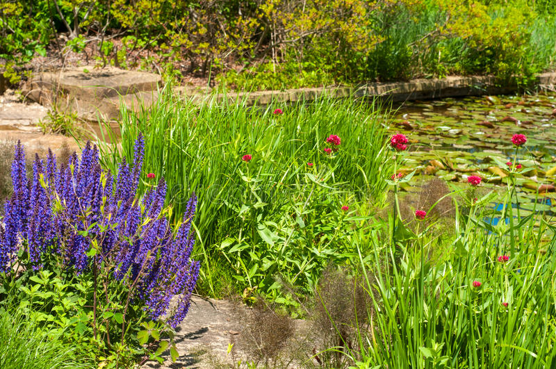 Pond garden. Beautiful flowers around a pond covered with lily pads royalty free stock photography