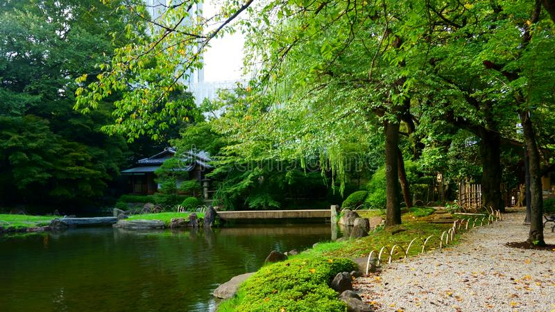 Pond in the Japanese garden. City park. Beginning of autumn royalty free stock image
