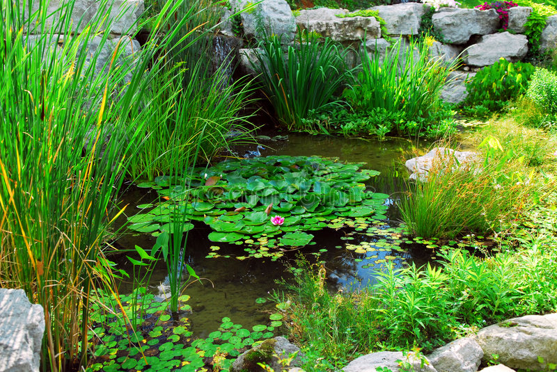 Download Pond landsaping stock photo. Image of nature, calm, artificial - 3107908