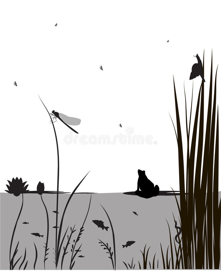 Pond. Life, under the water,dragonfly, river's animal, shadows, black and white, vector royalty free illustration