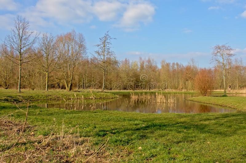 Pond in a meadow with trees royalty free stock photo
