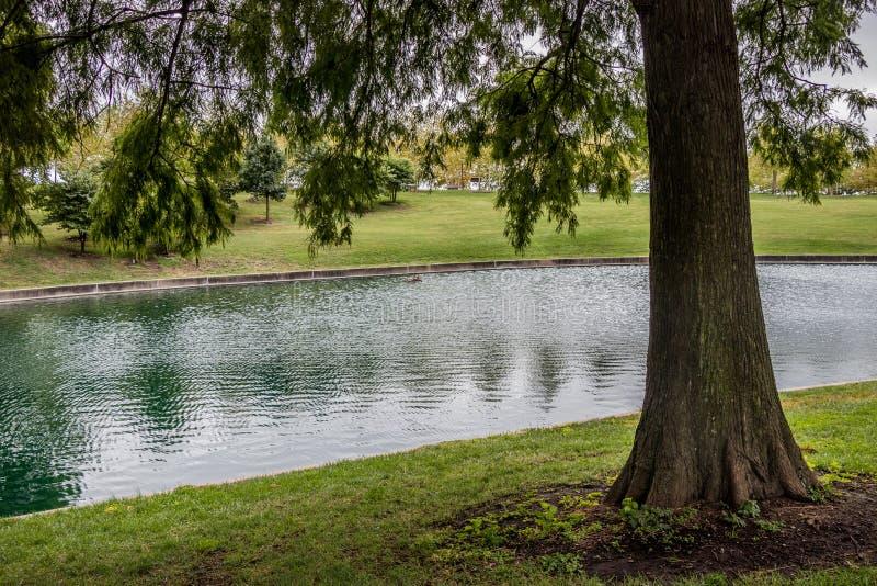 Pond och tree Gateway Arch National Park, St Louis, Missouri royaltyfria bilder