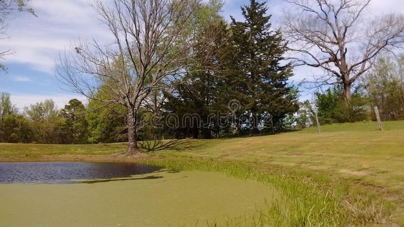 Pond outside my home royalty free stock photos
