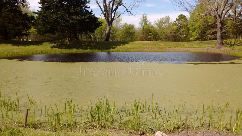 Pond outside my home royalty free stock photo