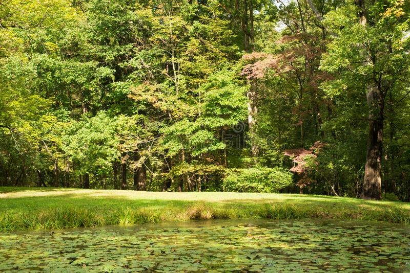 Pond overtaken by lily pads in Watkins state park. Pond overtaken by lily pads in Watkins Glen state park in western New York state. Bright sunny autumn day royalty free stock image