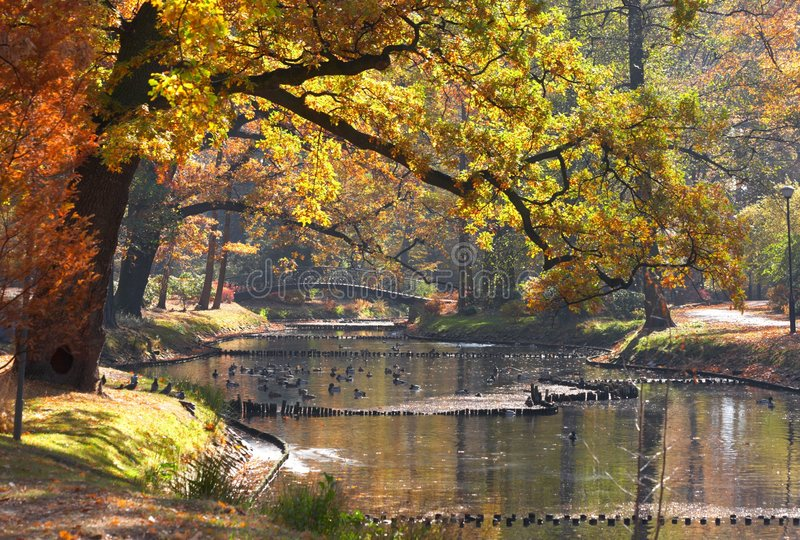 Pond in park royalty free stock photos