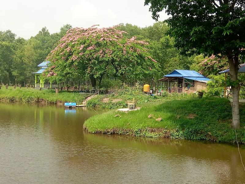 This pond of park form Eastern  Region nepal stock photography
