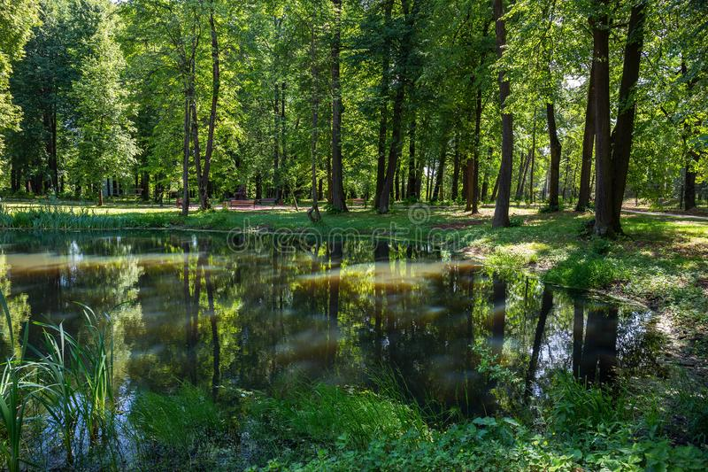 Pond in the park in summer royalty free stock photography