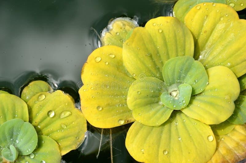 Download Pond Plants Stock Image - Image: 32843731