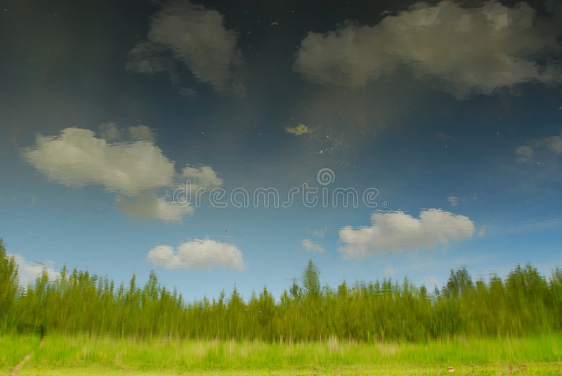 Download Pond reflection stock photo. Image of meadow, park, grass - 4262024