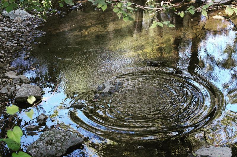 Pond Ripples. Ripples in a creek from a rock royalty free stock photos