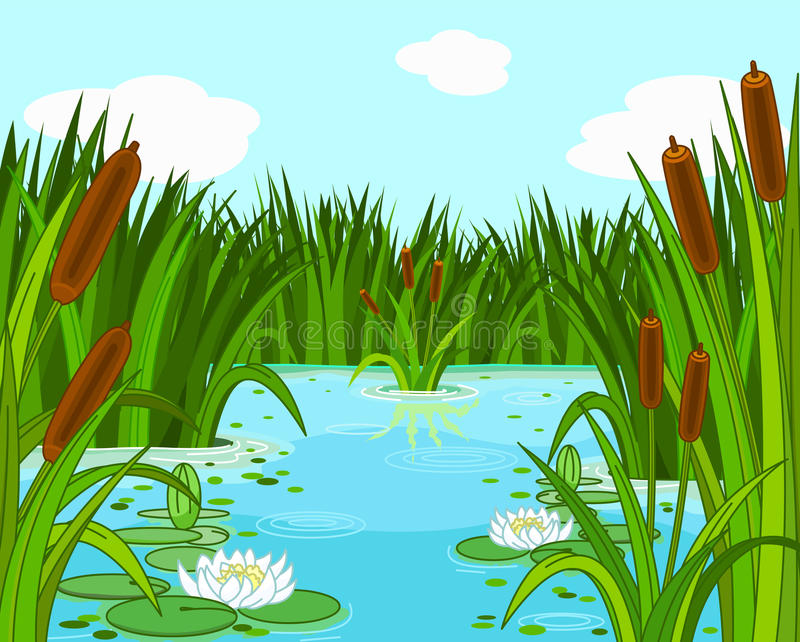 Pond Scene Royalty Free Stock Photography