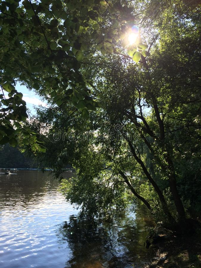 Pond in the shade of trees in the park stock photography