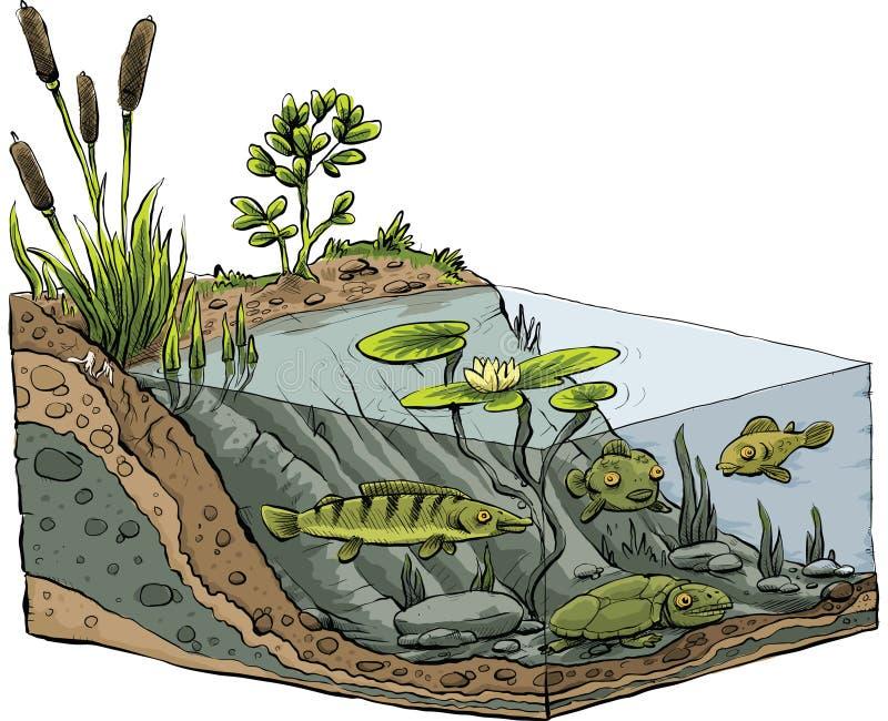 Картинка озеро в разрезе