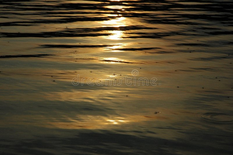 Download Pond-skaters stock photo. Image of river, lake, summer - 180326