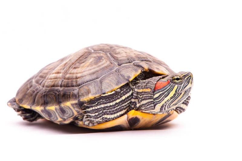 Download Pond Slider  On The White Background Stock Photo - Image: 26796700