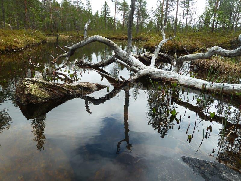 Pond stock photography