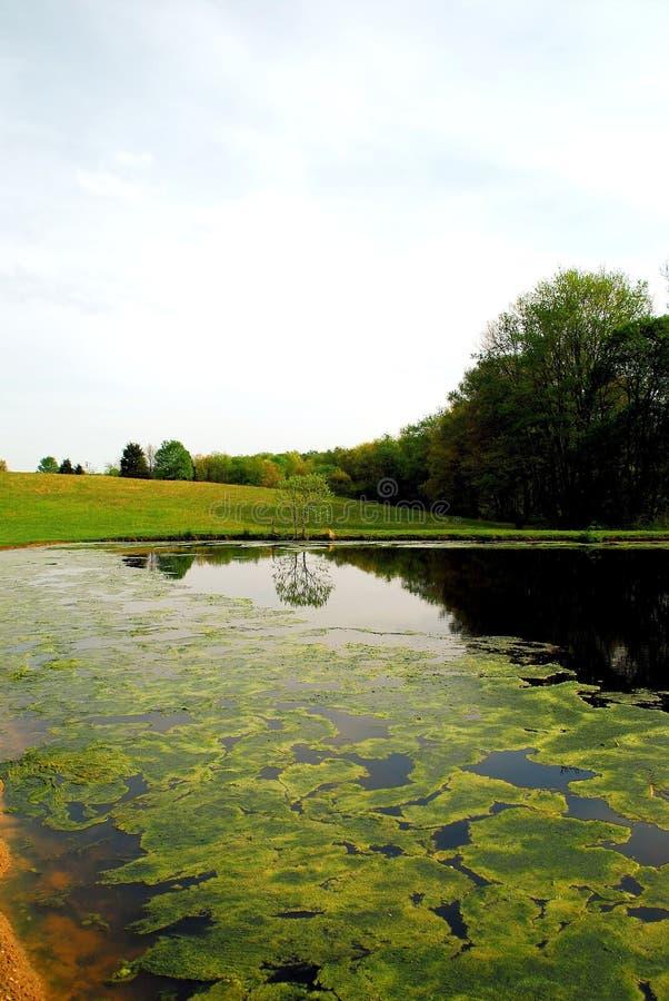 Pond In Springtime 2 Stock Photos
