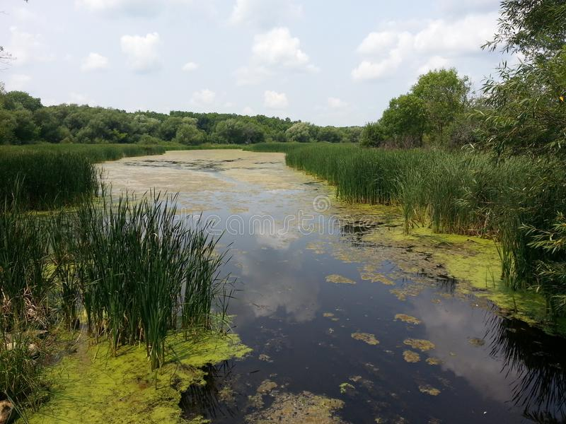 Pond at the State Park royalty free stock photography