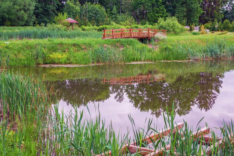 Pond in the summer park stock photography