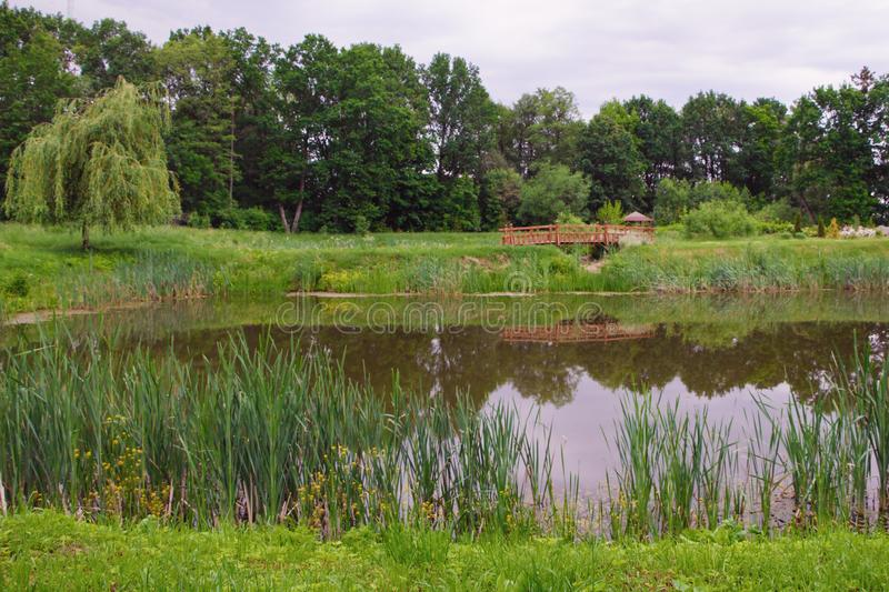 Pond in the summer park royalty free stock photography