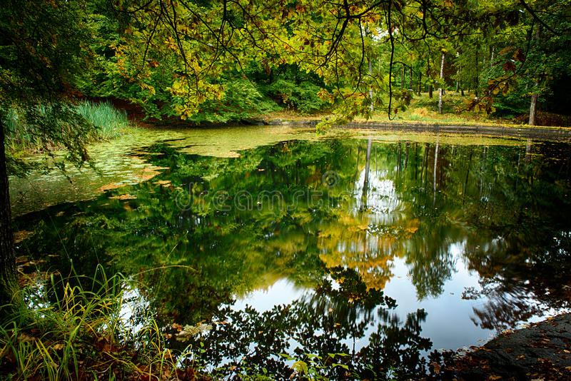 Pond royalty free stock photo
