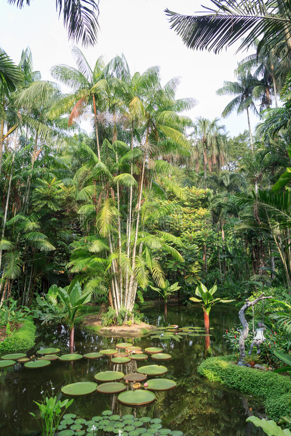 Pond with water lilies and palm trees in Singapore Botanic Gardens stock photos