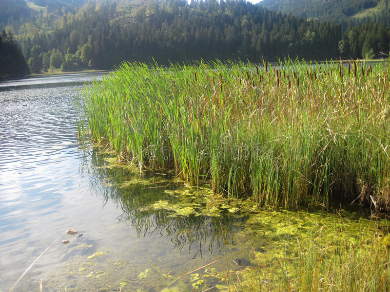 Download Pond And Water Plants Stock Photos - Image: 24291883
