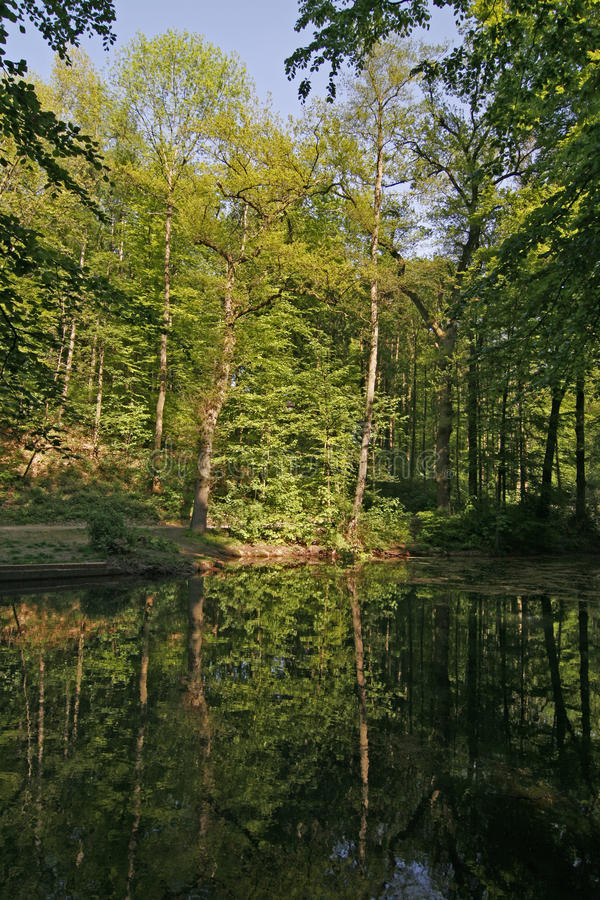 Download Pond With Water Reflection In Lower Saxony, German Stock Photography - Image: 12475832
