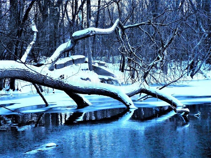 Pond in winter stock photos