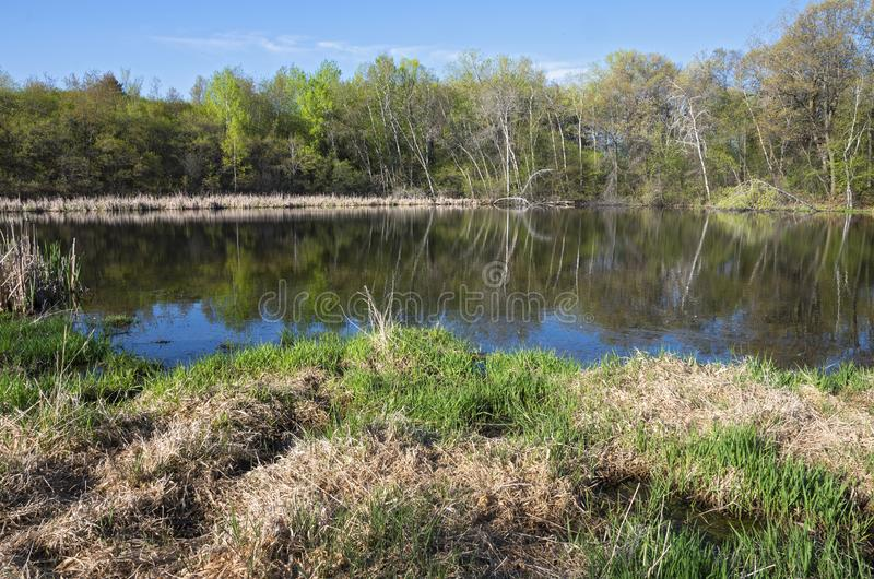 Pond and Woodlands Across Water. Pond and woodlands on opposite bank with trees reflected in water at salem hills park in inver grove heights minnesota royalty free stock image