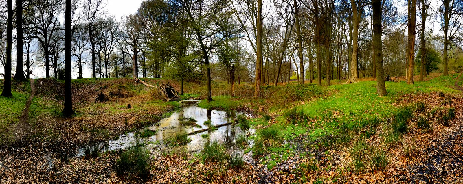A panoramic view of a pond in the woods stock photo