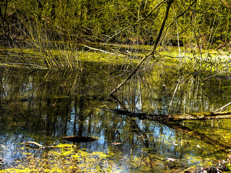 The pond in the woods stock photo