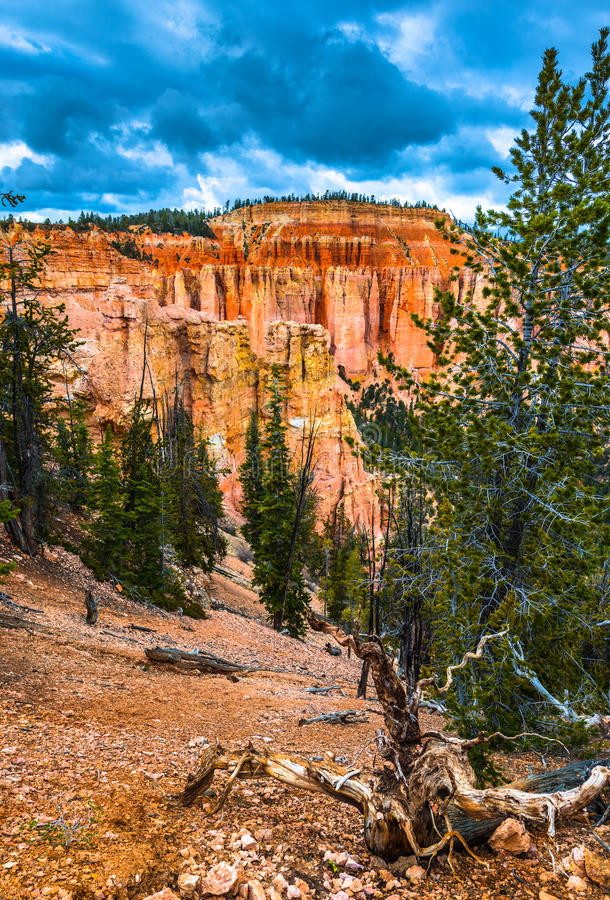 Free Ponderosa Canyon Bryce National Park Stock Images - 56903444