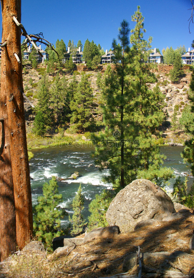 Download Ponderosa Pine And Modern House Stock Photo - Image: 6996120