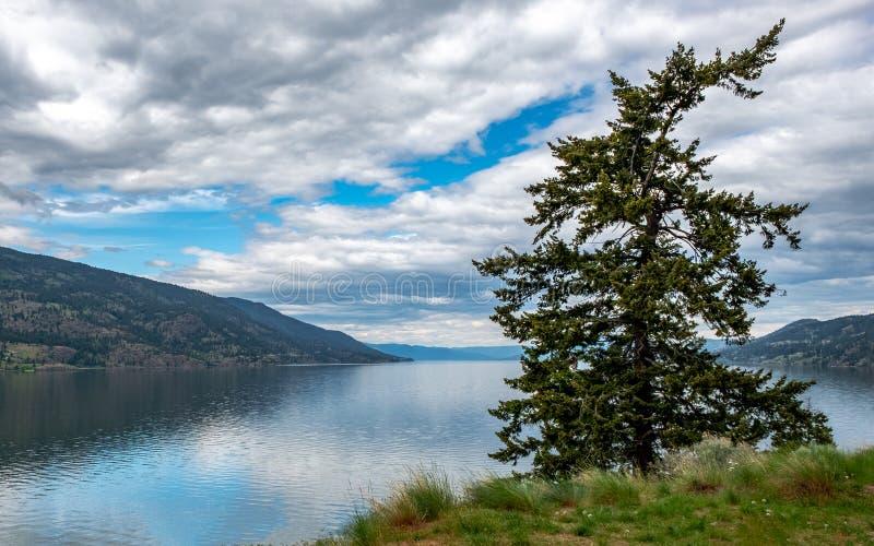 Ponderosa sörjer Okanagan sjön royaltyfri bild