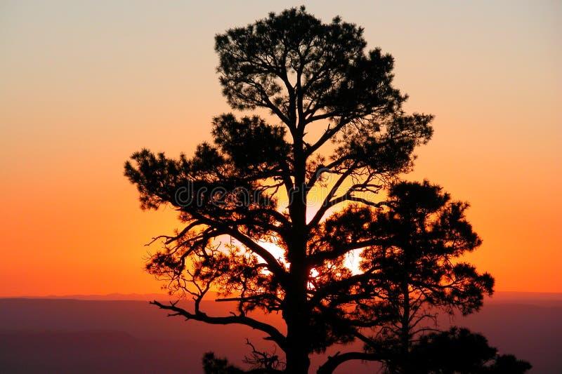 Ponderosa Sonnenaufgang stockfotografie