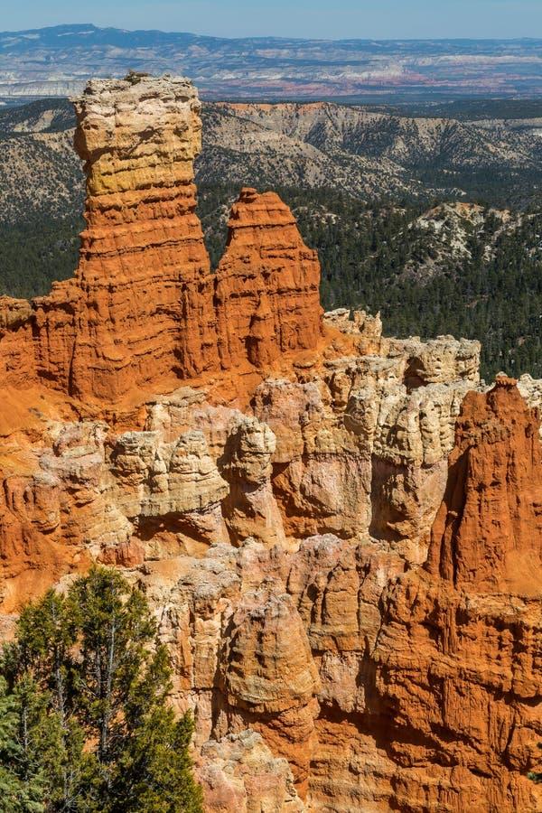 Ponderosa synvinkel på Bryce Canyon royaltyfri bild