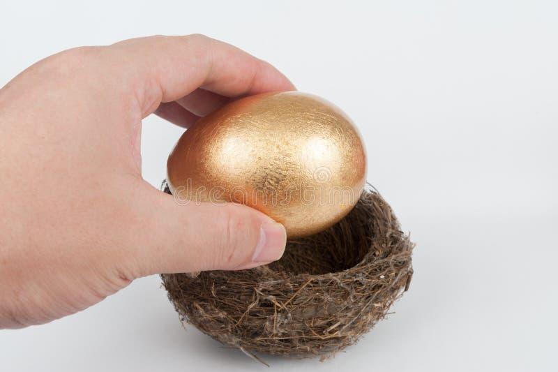 Pondo o ovo dourado no ninho fotografia de stock