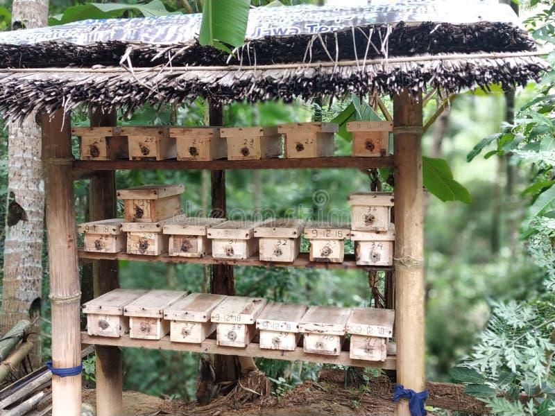 Pondoir à l'idée animale d'abeille image libre de droits