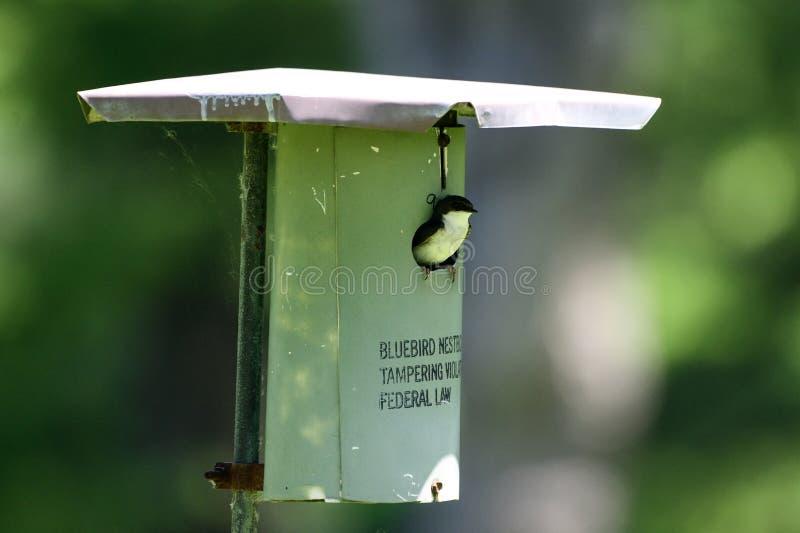 Pondoir d'oiseau bleu en métal images libres de droits