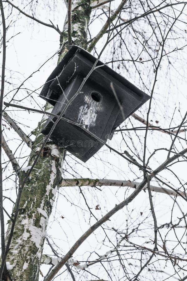 Pondoir noir accrochant sur l'arbre de bouleau dans l'hiver images libres de droits