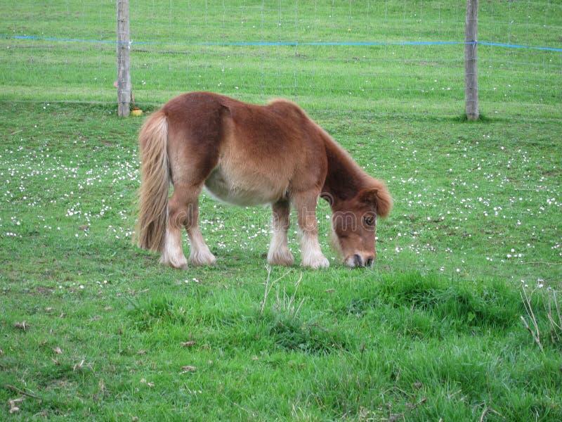 Poney photos stock